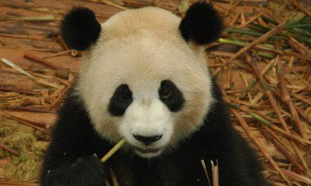 Google Panda en France, ce n'est pas si terrible que ça!